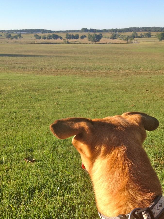 Sadie looking at the fields