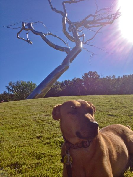 Dog with Roxy Paine's Yield sculpture in the background