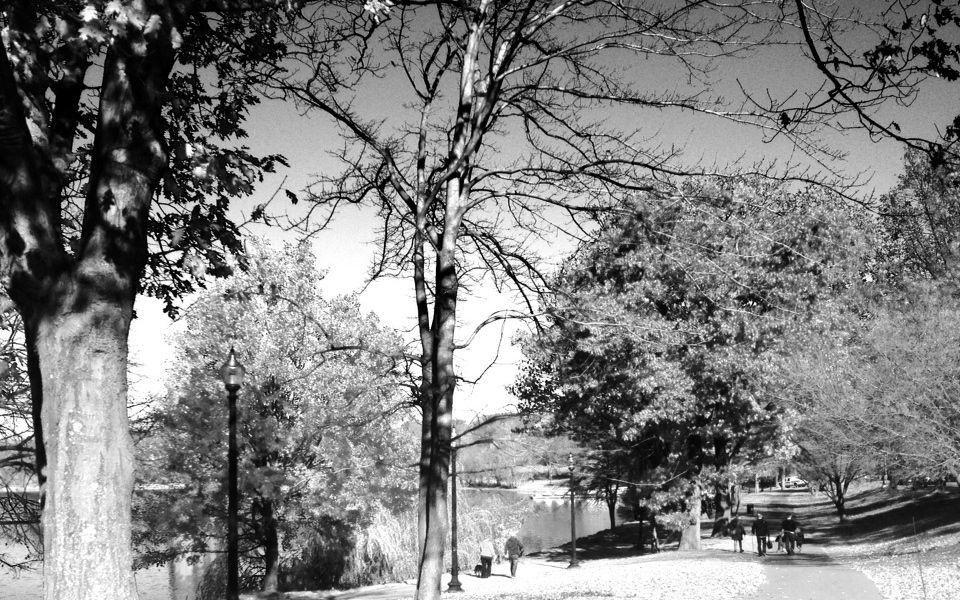 Black and white photo of trees and leaves