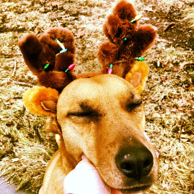 Dog wearing antlers