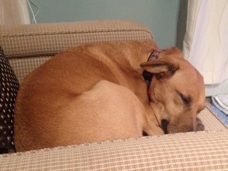 Sadie sleeping on chair
