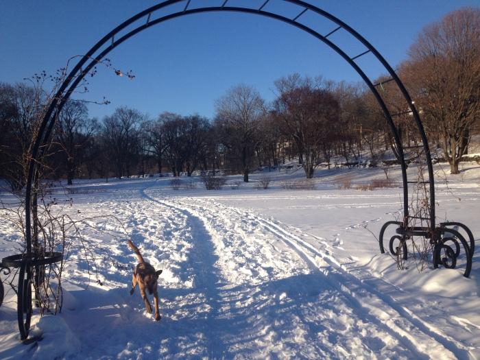 Sadie playing the snow