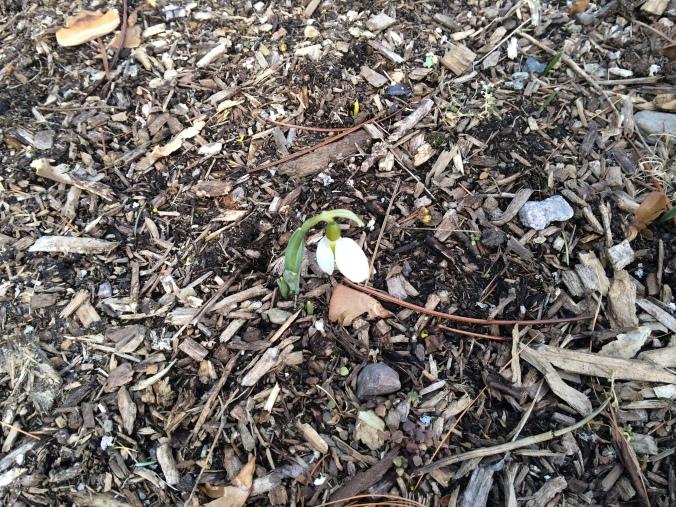 White flower on brown ground