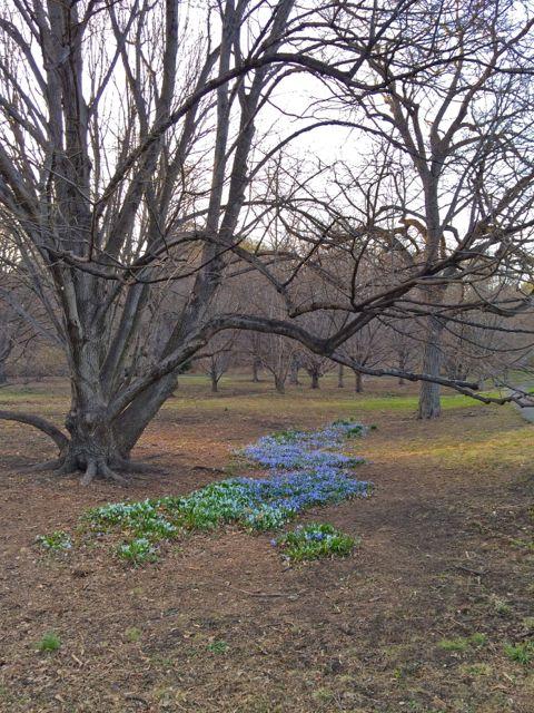 FLowers below a brown tree