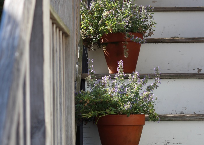 Flowers in pots on stairs