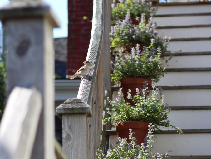 Bird perched on a railing near potted flowers
