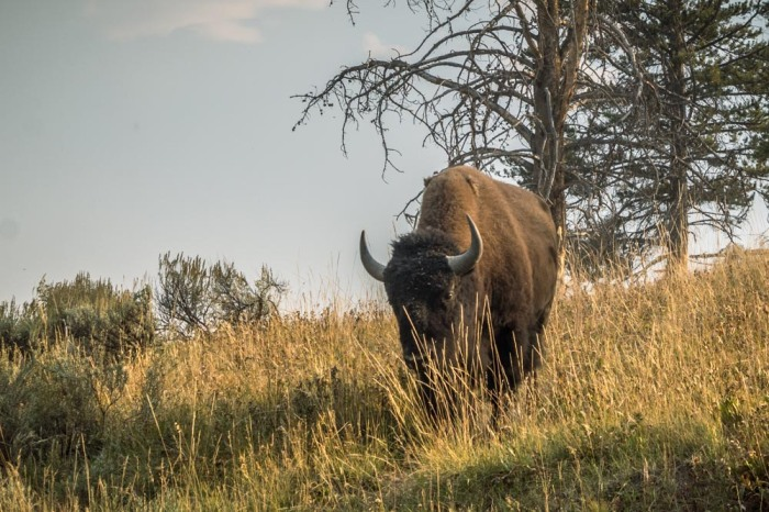 Yellowstone day 2 (72 of 40)