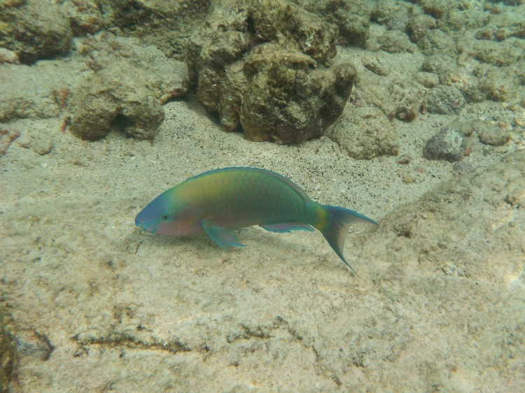 Snorkeling (1 of 1)